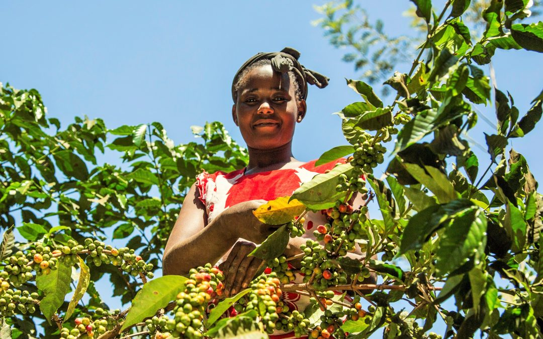 Who Influences Women Smallholder Farmers in Zambia?