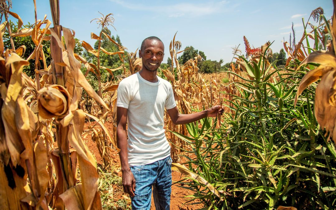 Marketing Agriculture Micro-Insurance through Rural Social Networks