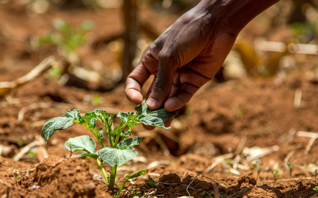 Promoting Smallholder Uptake, Adoption and Referral of Soil Testing Services