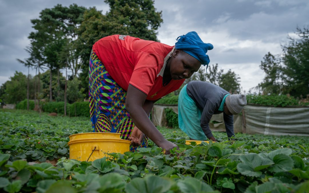 The Impact of Digital Services on Women Smallholder Farmers